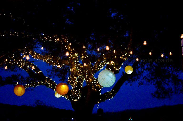 Bäume mit Lichtern